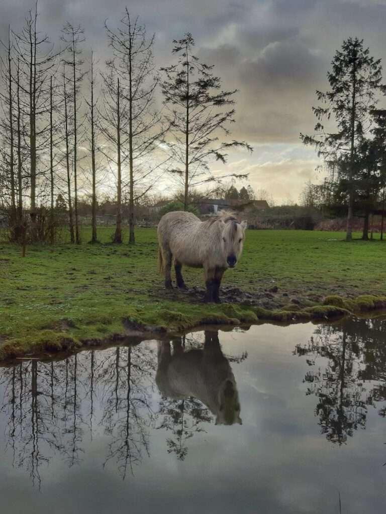 Paardje in het park
