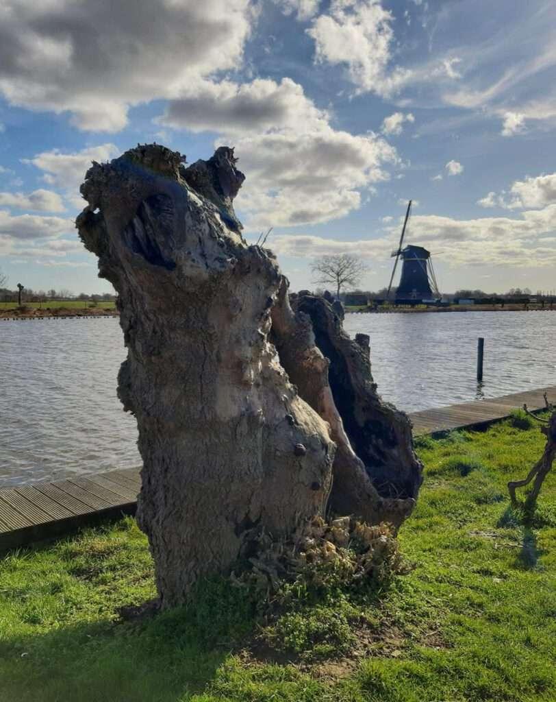 Wilg met molen - Nederhorst den Berg