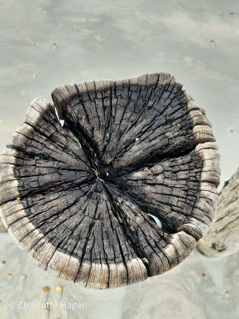 houten paal 2