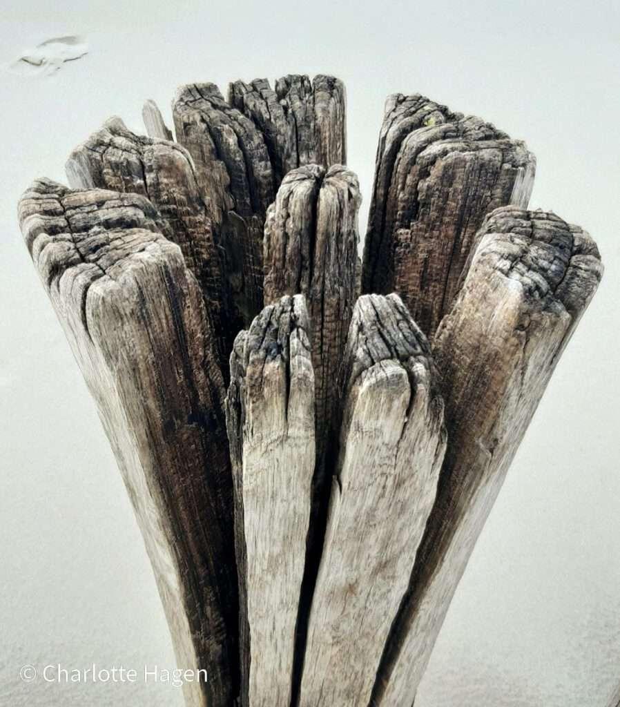 houten paal 1