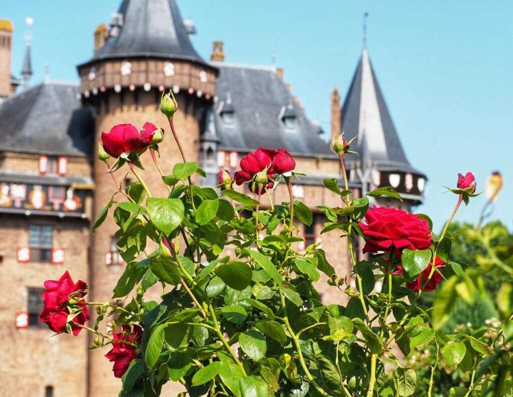 rozentuin kasteel 2
