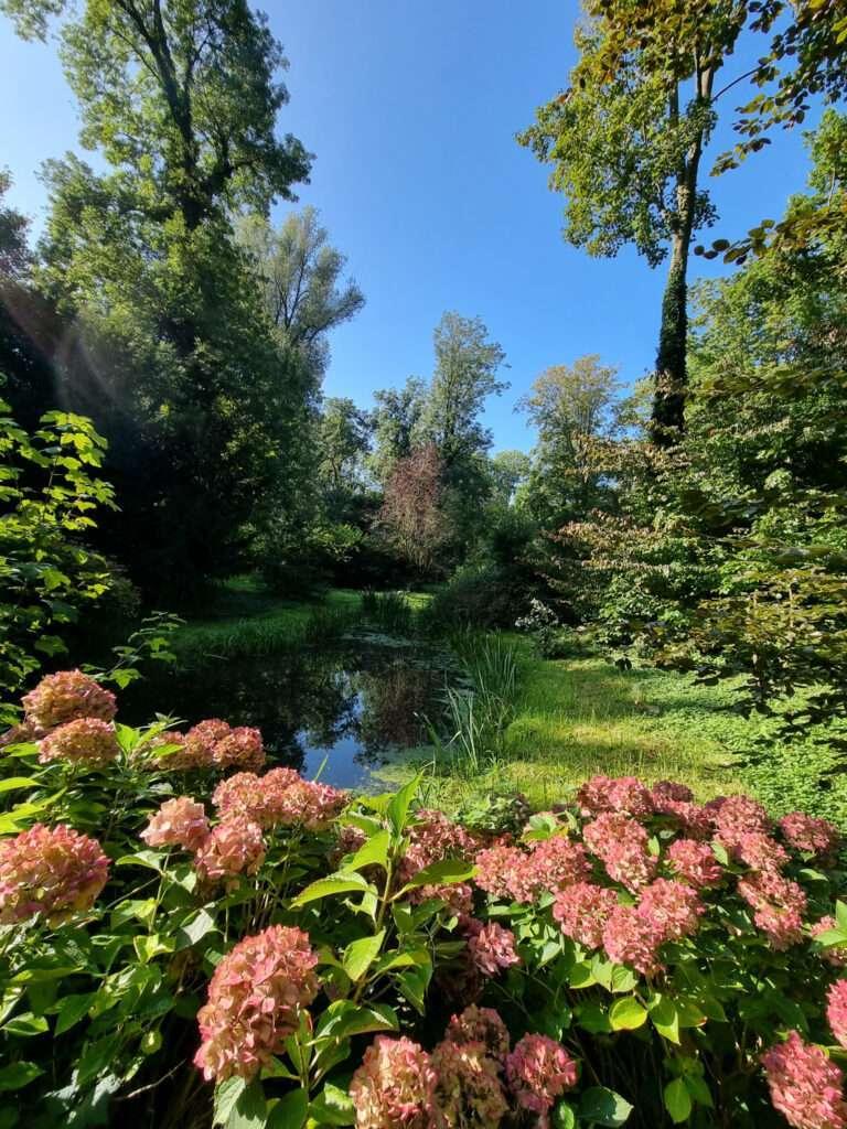 hortensia kasteelpark
